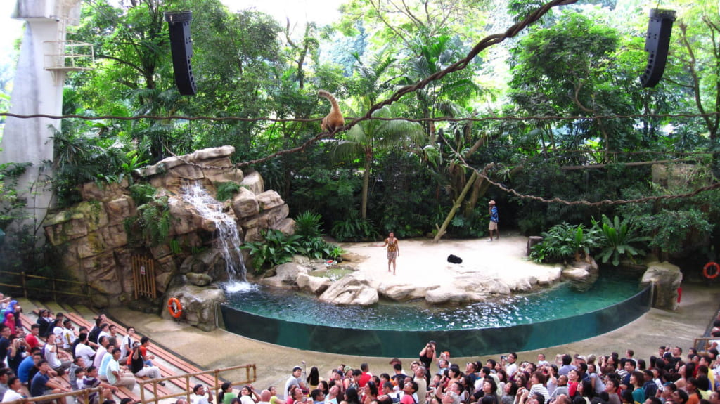Rainforest Fights Back Show - Singapore Zoo