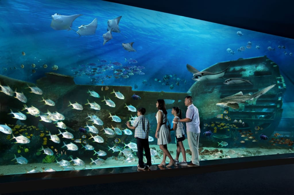 Du lịch Singapore - S.E.A Aquarium